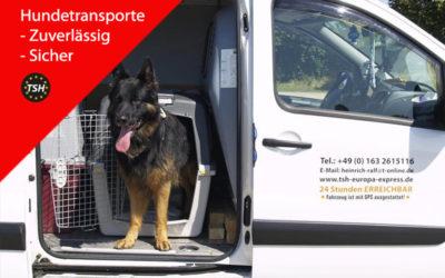 2018: Hundetransporte Europaweit
