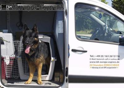 TSH Hundetransporte Europaweit