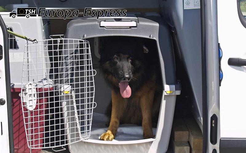 Sichere Hundeboxen für einen sicheren Transport